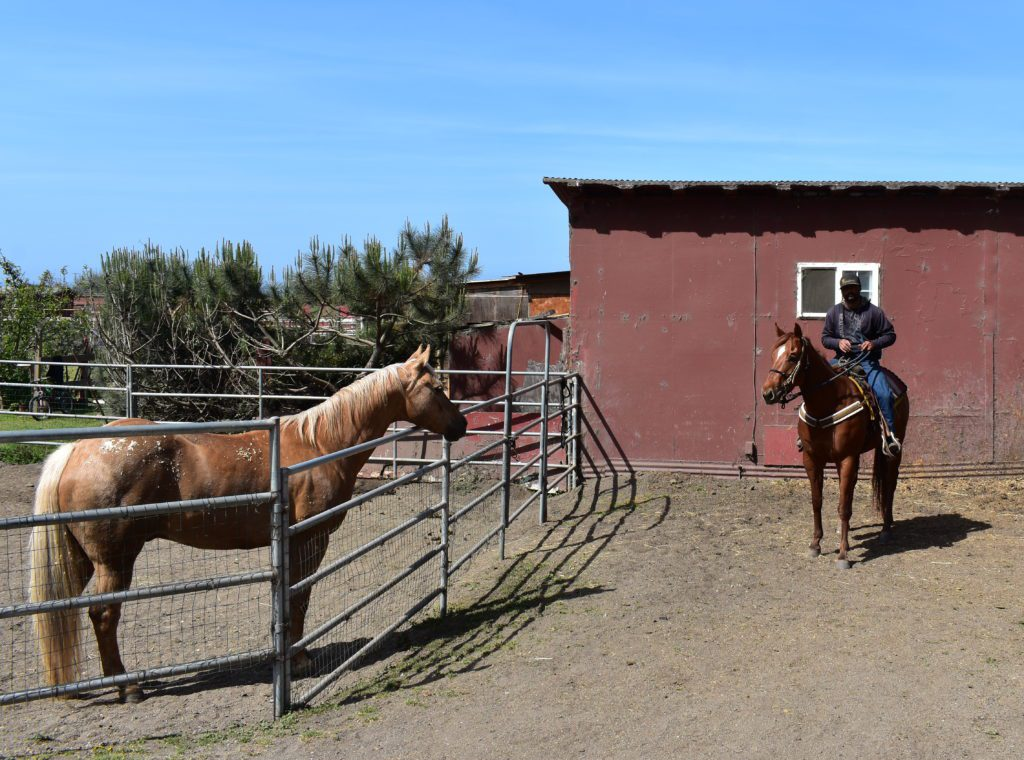 Sea Horse Ranch in Half Moon Bay offering horseback riding along the beach