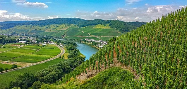 Mosel is the top wine region in Germany, and one of the best wine regions in all of Europe.