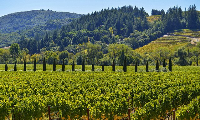 Sonoma Valley is one of the best wine regions and destinations in the world.
