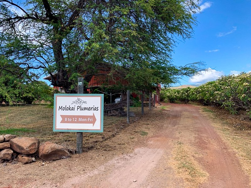 Molokai Plumerias is a nice place to stop by, especially if you have young children.