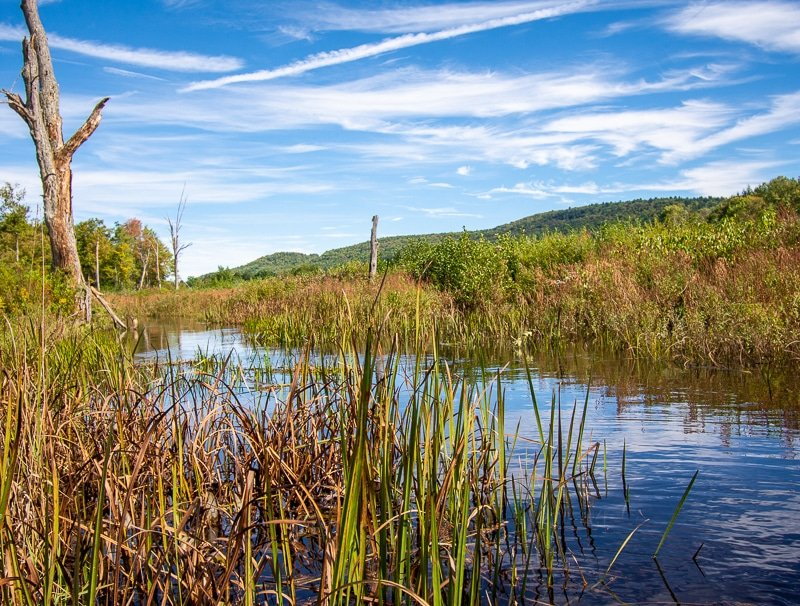 The Berkshires in Western, Massachusetts is one of the best road trips from Boston.