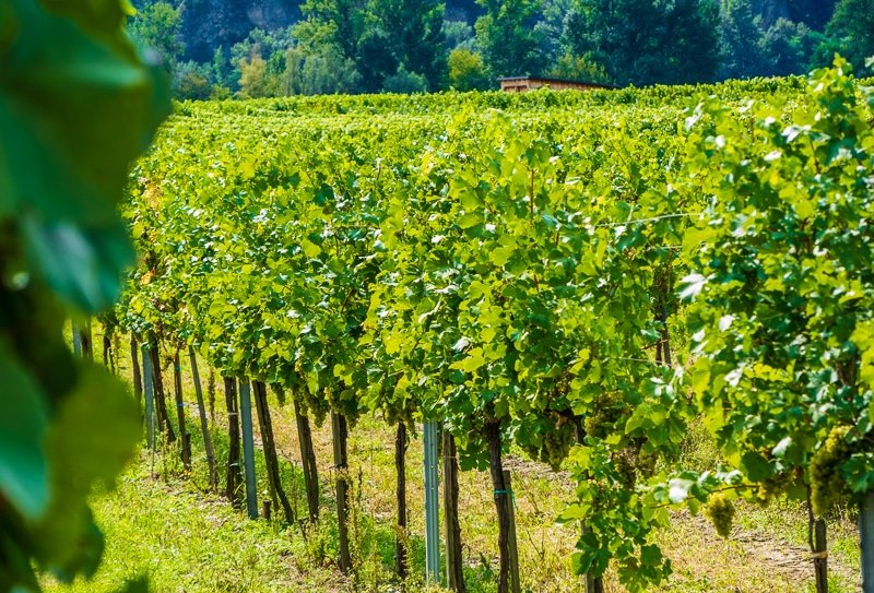 Nashoba Valley Winery is one of the best day trips and road trips from Boston.