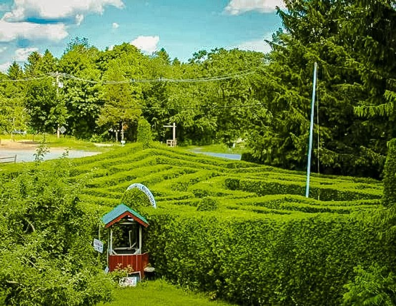 Hedge maze at Honey Pot Hill Orchards