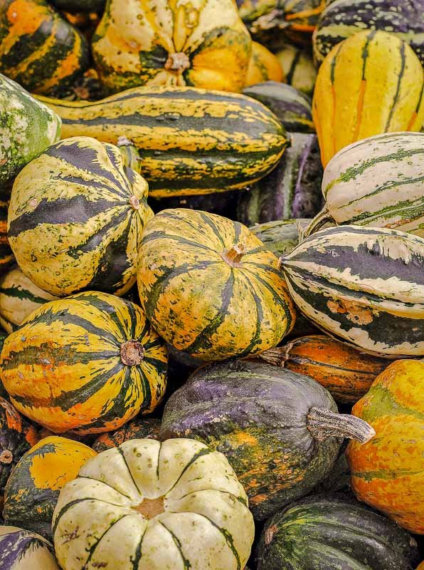 Fall festivals in New England coincide with the autumn harvest.