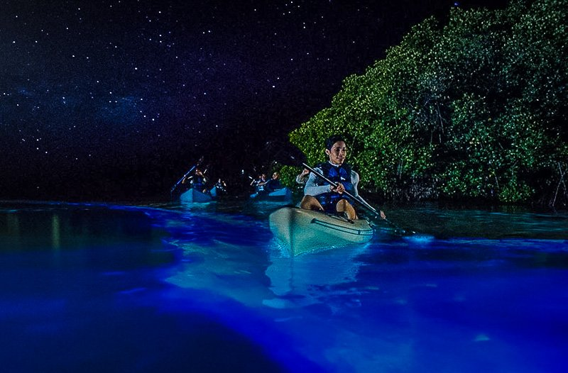 Take a bioluminescent kayaking tour in Florida, and you'll see why it's one of the best hidden gems in Florida