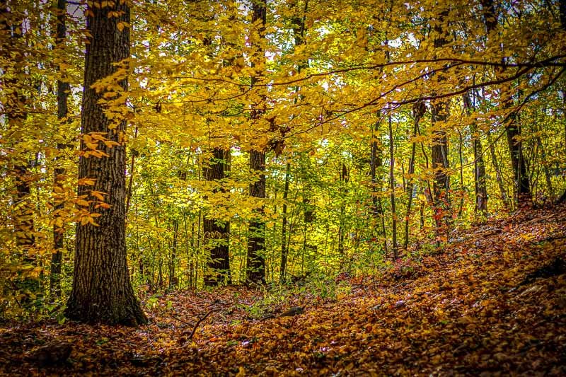 In addition to the fall foliage you'll find in the city, there are many other great places for leaf peeping in Western New York as well.
