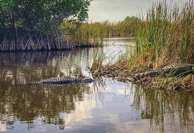 Crocodiles and alligators are just some of the wildlife you'll see in Everglades National Park.