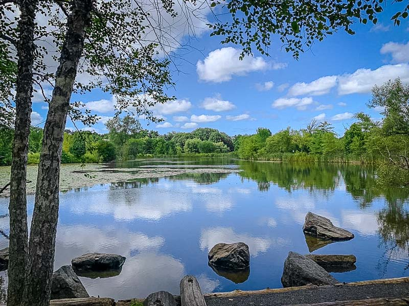 This reservation in Cambridge is popular for hiking, jogging, and bike riding.
