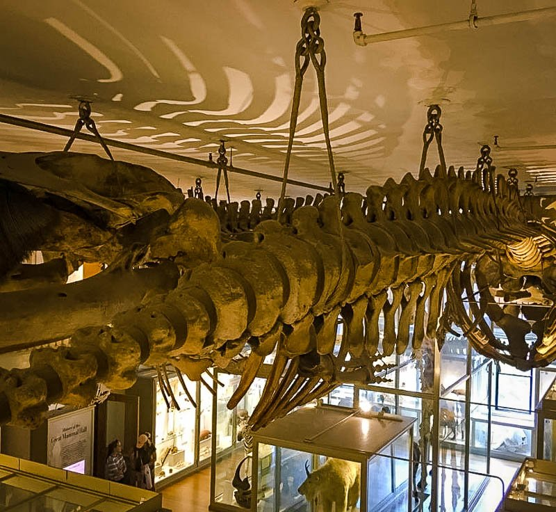The Harvard Museum of Natural History is one of the best things to do in Cambridge, Massachusetts.