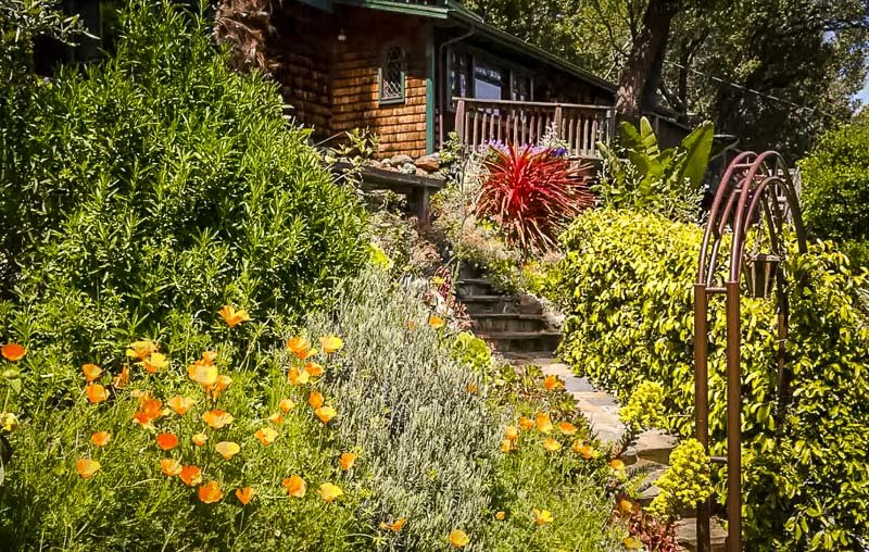 Secluded Airbnb for rent near Muir Woods.