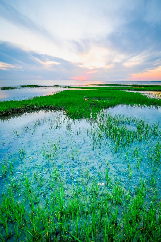 A marsh on Cape Cod