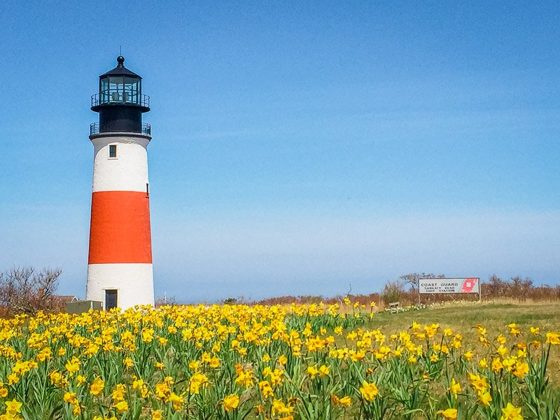 In New England, Daffodils bloom in the spring. This is likely the best time of year to visit New England
