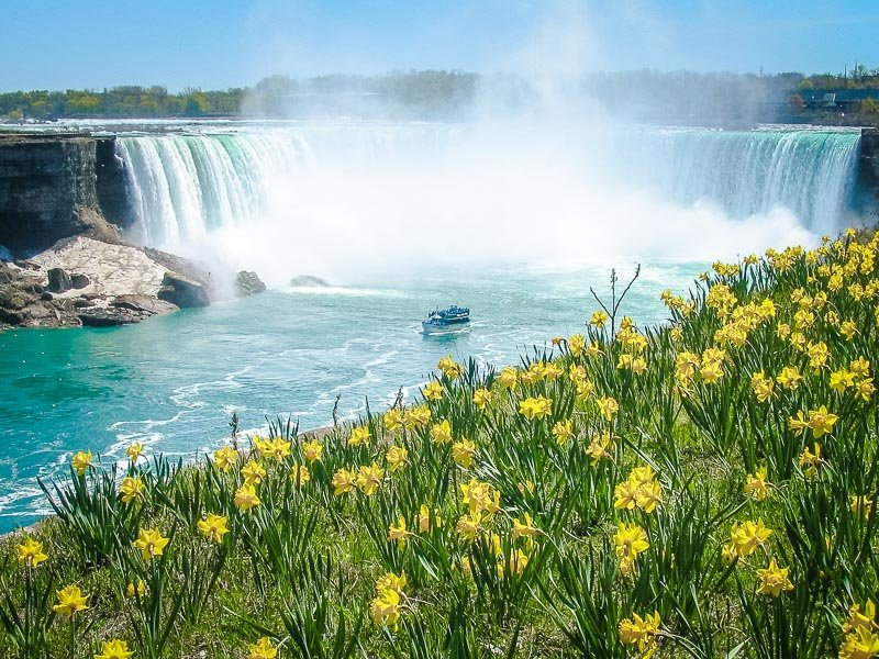 The magnificent waterfalls surrounded by Daffodils.