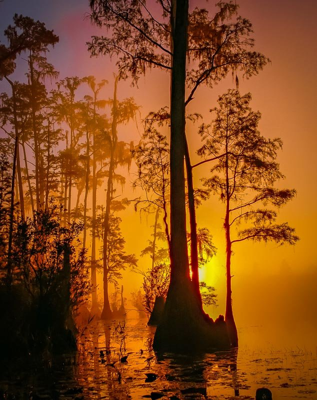 Okefenokee Swamp is one of the best and most beautiful places to visit in Georgia.