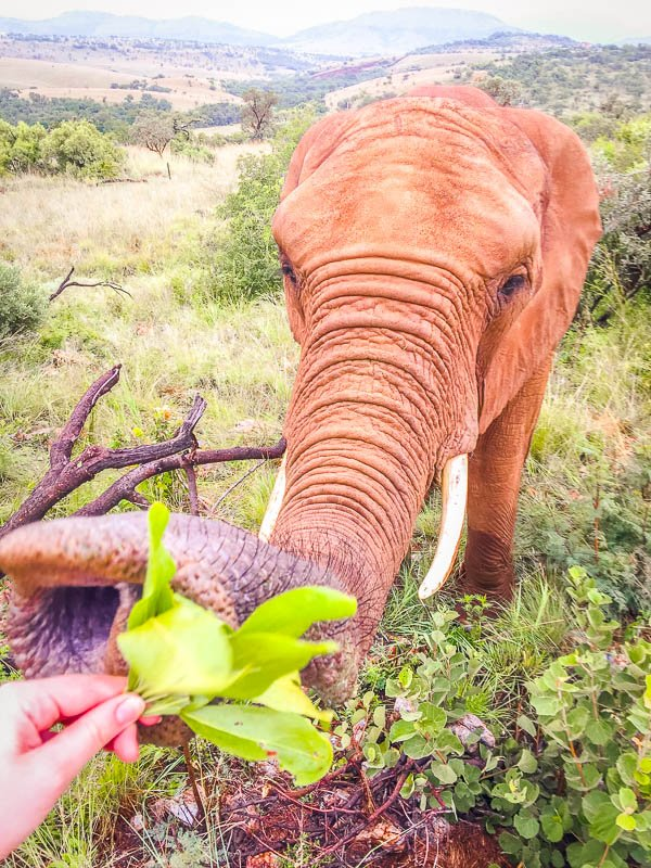 Consider volunteering at an elephant sanctuary