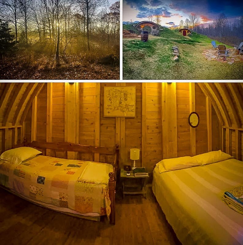 Beautiful forest views from this earth house rental.
