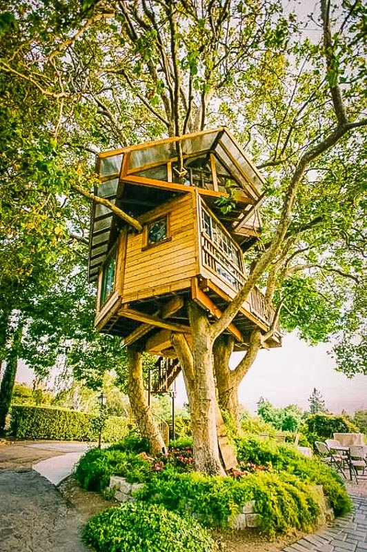 Unique rental elevated in the trees