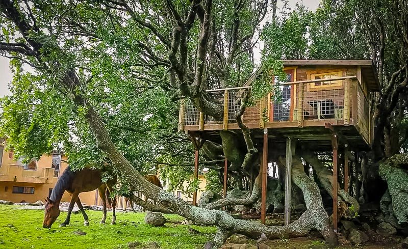 A cozy California treehouse Airbnb near a horse stable.