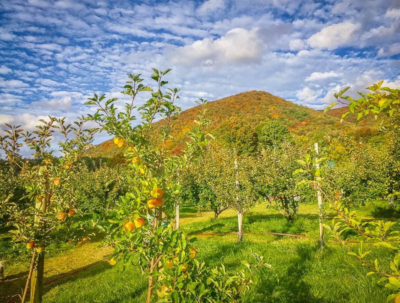 An orchard in Vermont with spectacular scenery at every turn.