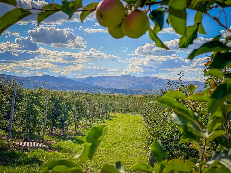 A VT apple orchard with views of Lake Champlain and Burlington