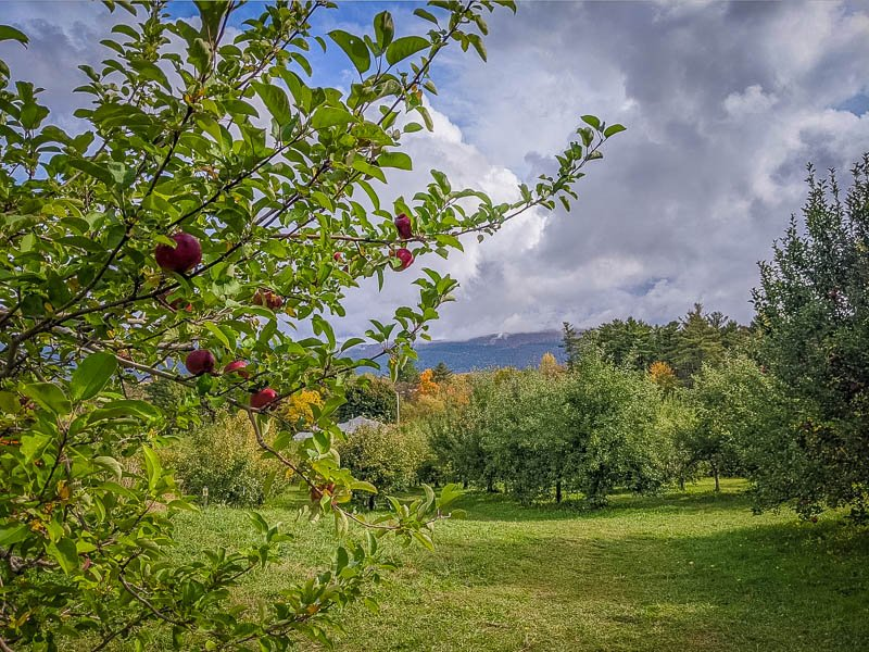 It would be a shame to write about the best Vermont apple orchards without mentioning this one in Middlebury