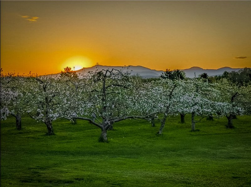 This is among the top Vermont apple farms