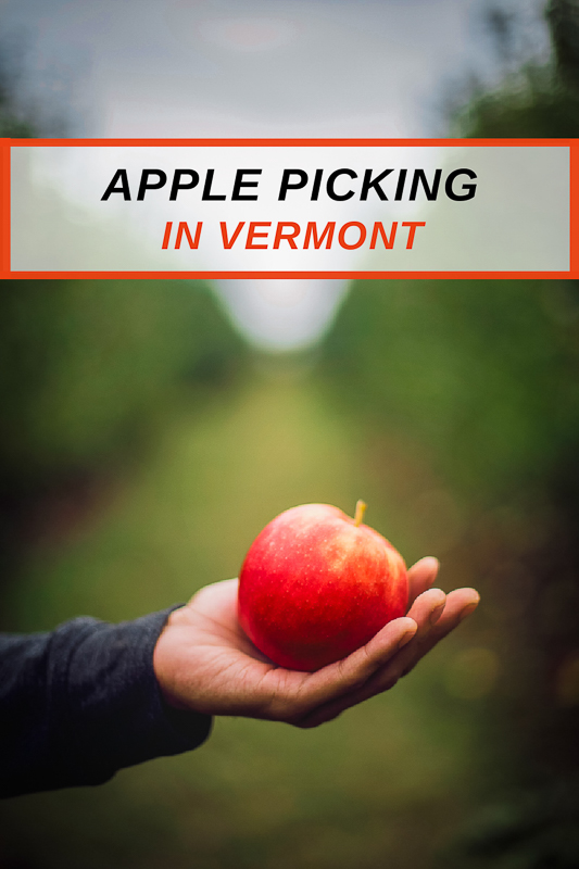 Most unique apple orchards and farms in Vermont