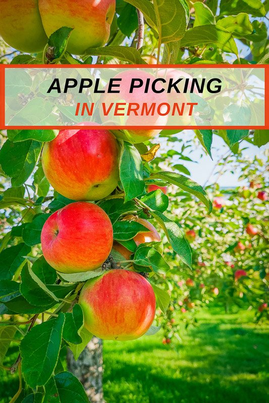Top VT apple picking for families and romantic gatherings